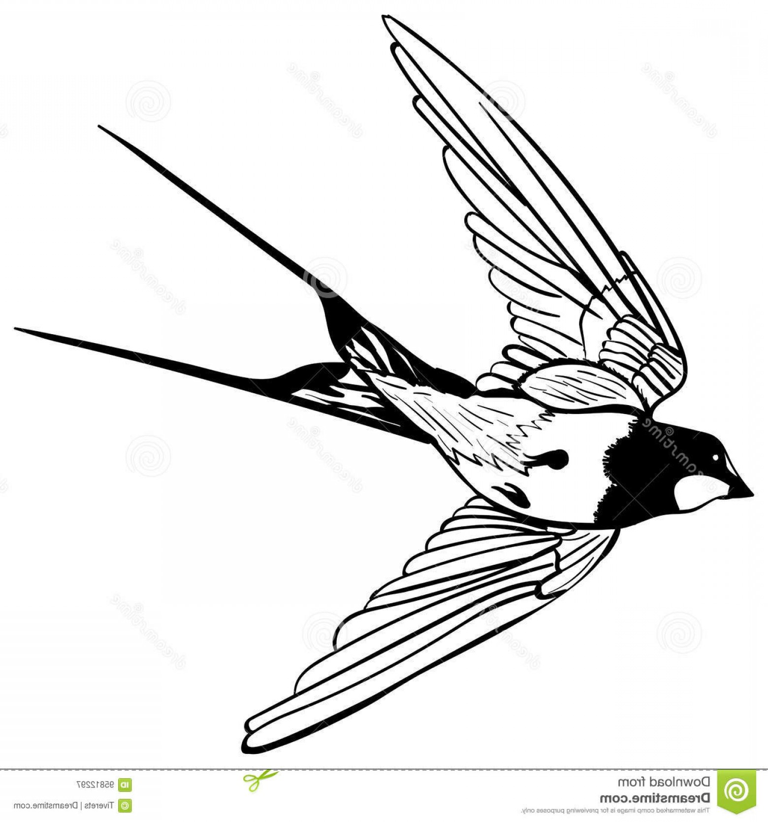 Swallow Vector: Stock Illustration Vector Silhouette Flying Swallow White Background Sketch Tattoo Swallows Black White Image