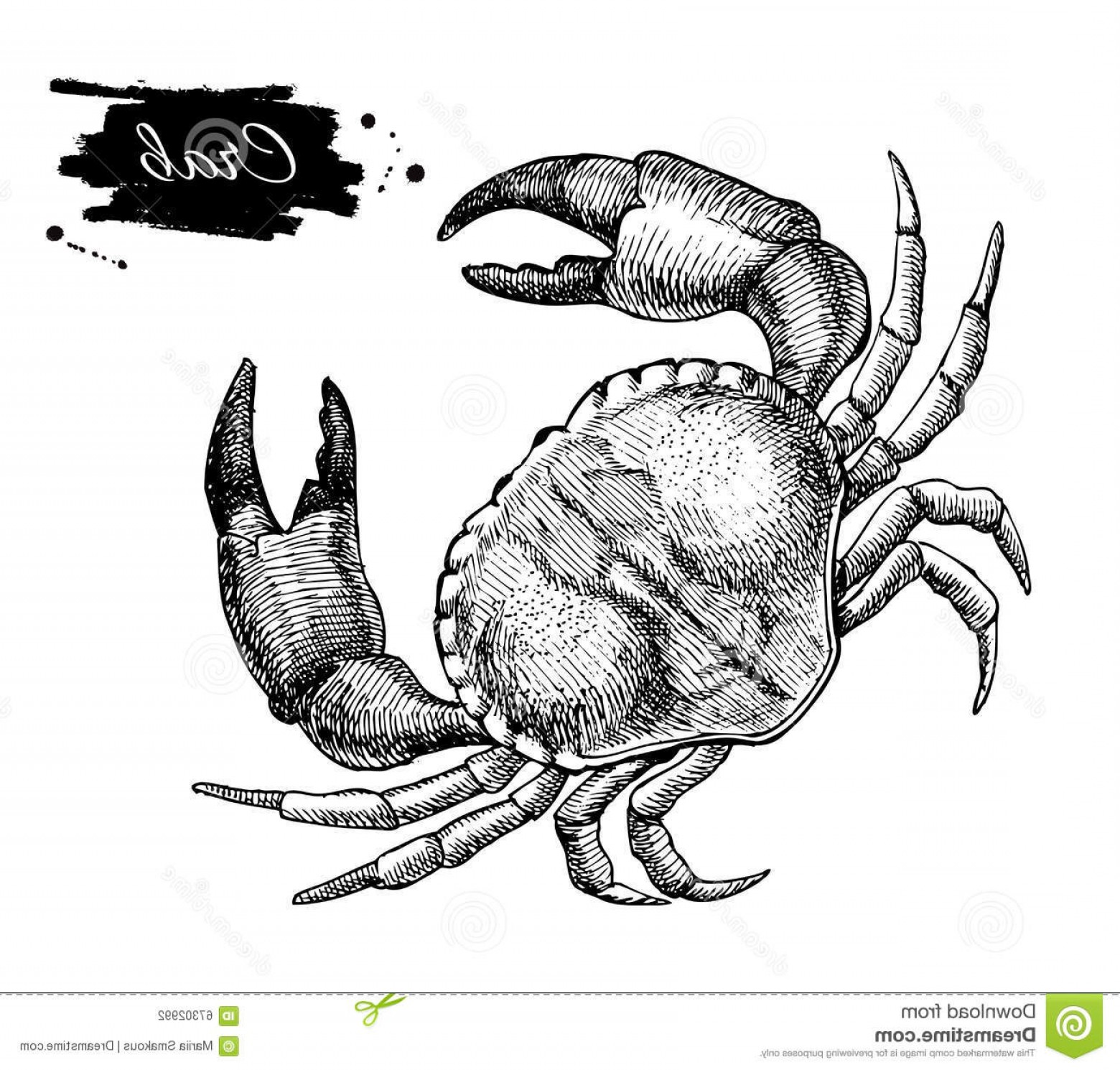 Crab Vector Black: Stock Illustration Vector Vintage Crab Drawing Hand Drawn Monochrome Seafood Illus Illustration Great Menu Poster Label Image