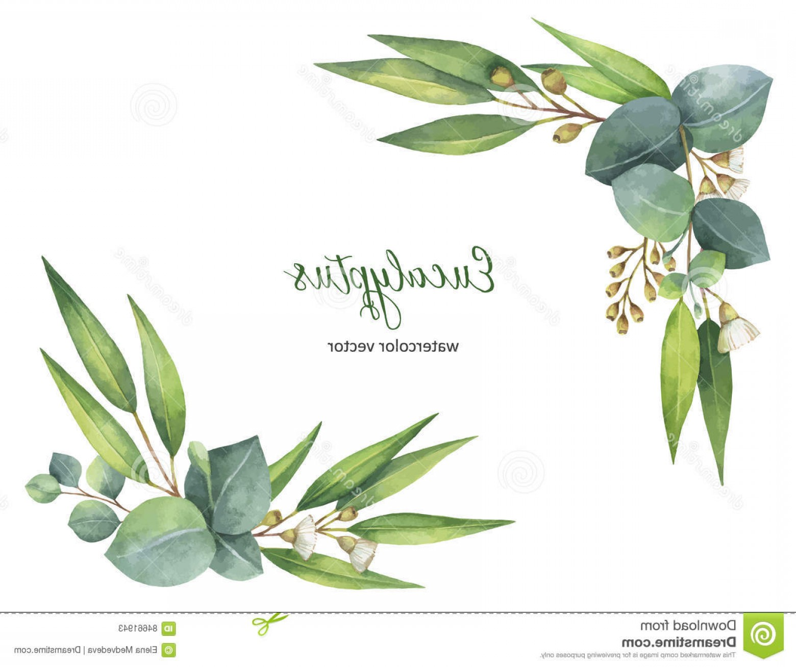 Summer Wreath Free Vector Watercolor: Stock Illustration Watercolor Vector Wreath Green Eucalyptus Leaves Branches Healing Herbs Cards Wedding Invitation Posters Save Image