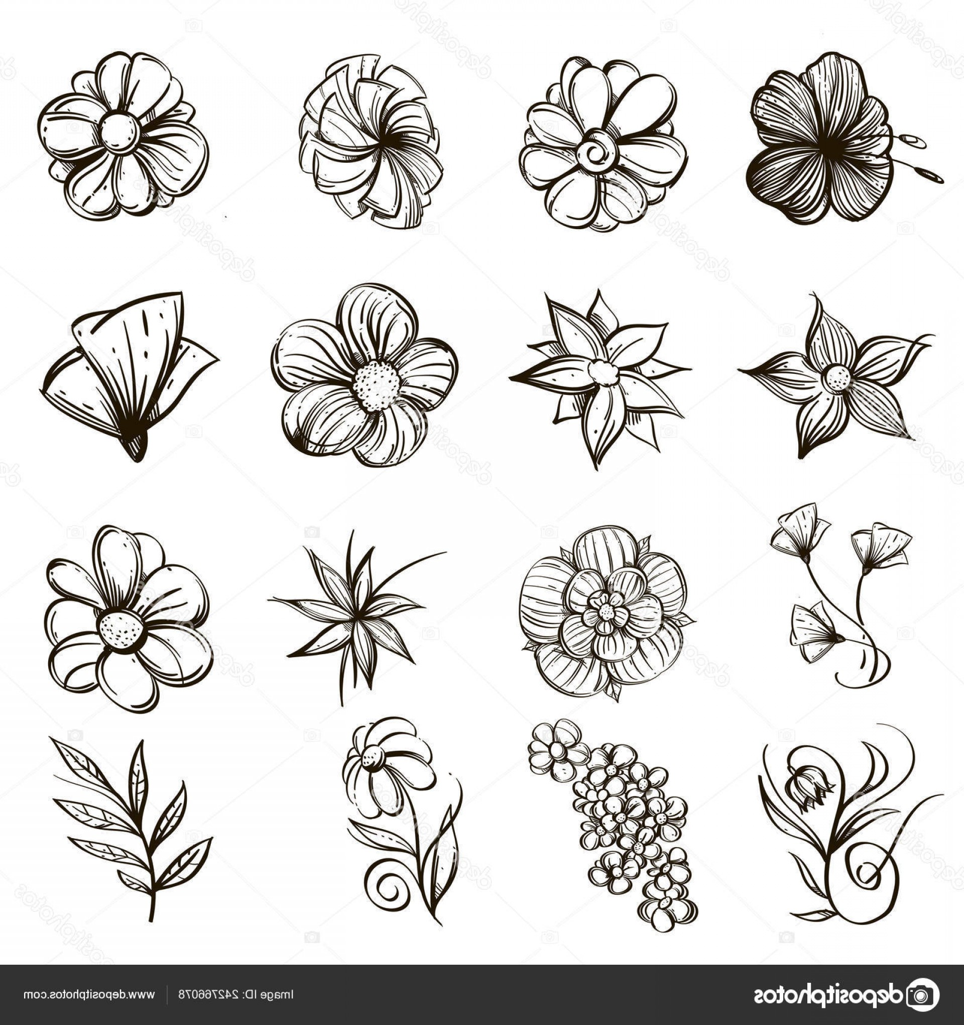 Wildflowers Outline Vector: Stock Illustration Wildflowers Set Outline Vector Illustrations