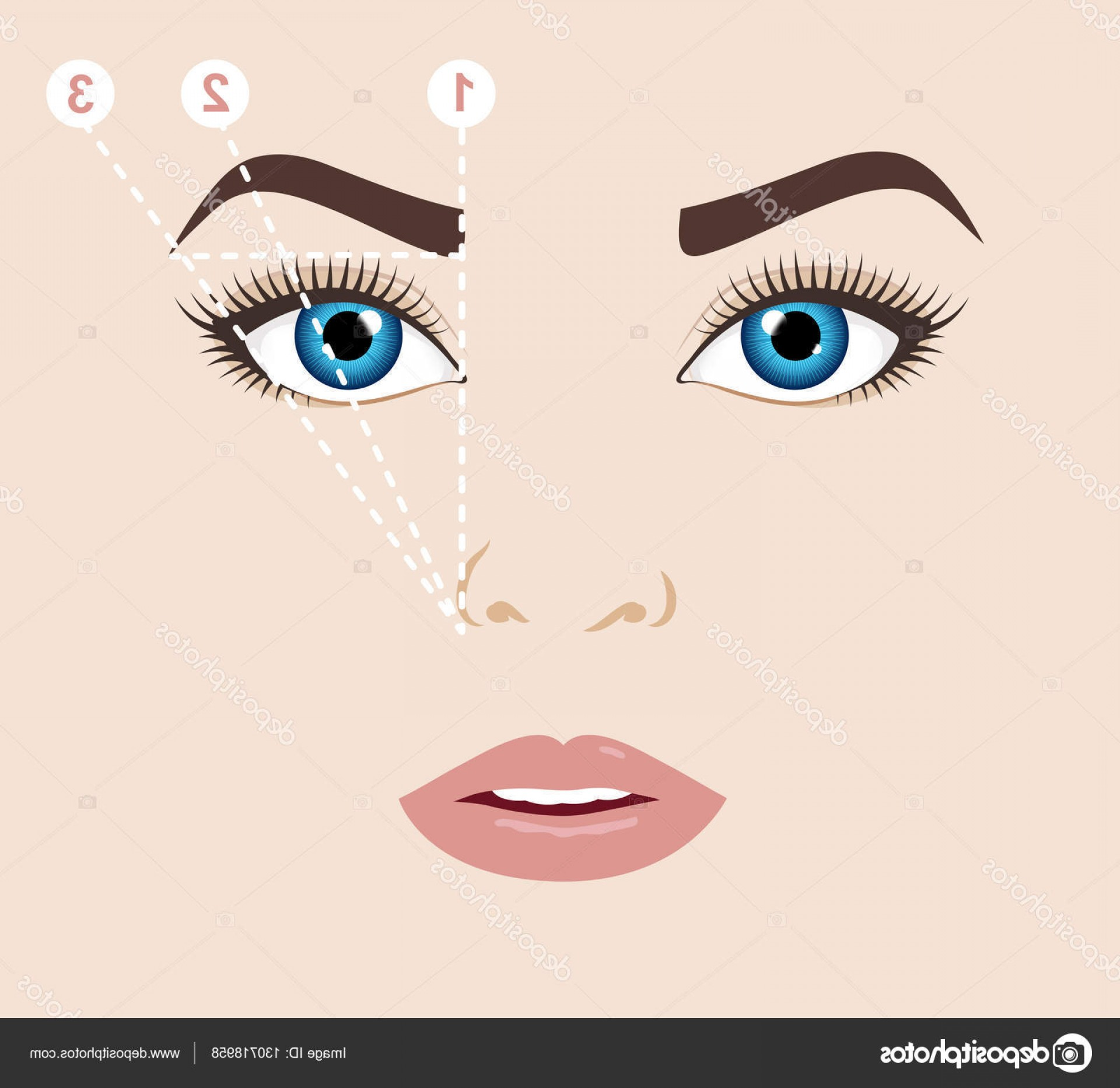 Vector Face Mapping: Stock Illustration Woman Face And Eyebrow Scheme