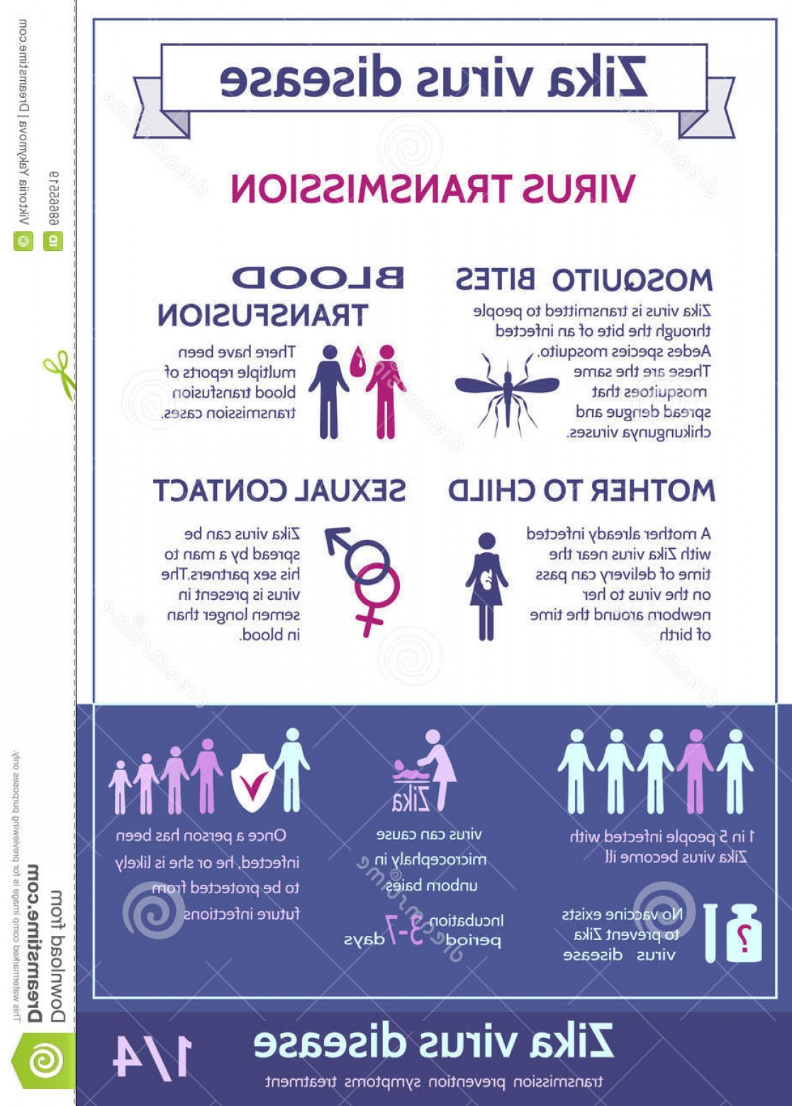 Vector -Borne Transmission Of Disease: Stock Illustration Zika Virus Infographic Icons Text Information Transmission Illness Health Care Concept Brochure Poster Banner Image