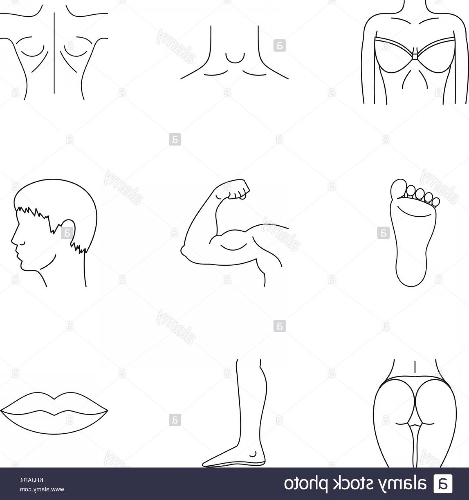 Human Body Outline Vector: Stock Image Human Body Icons Set Outline Style