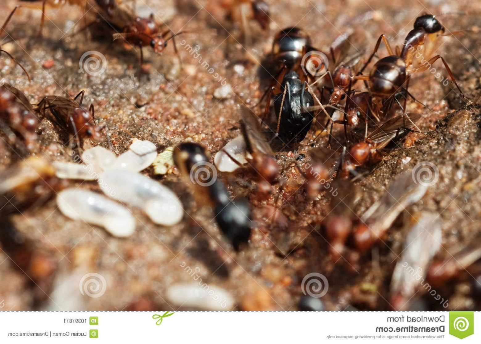 Termites With Wings Vector: Stock Image Termites Flying Ants Image