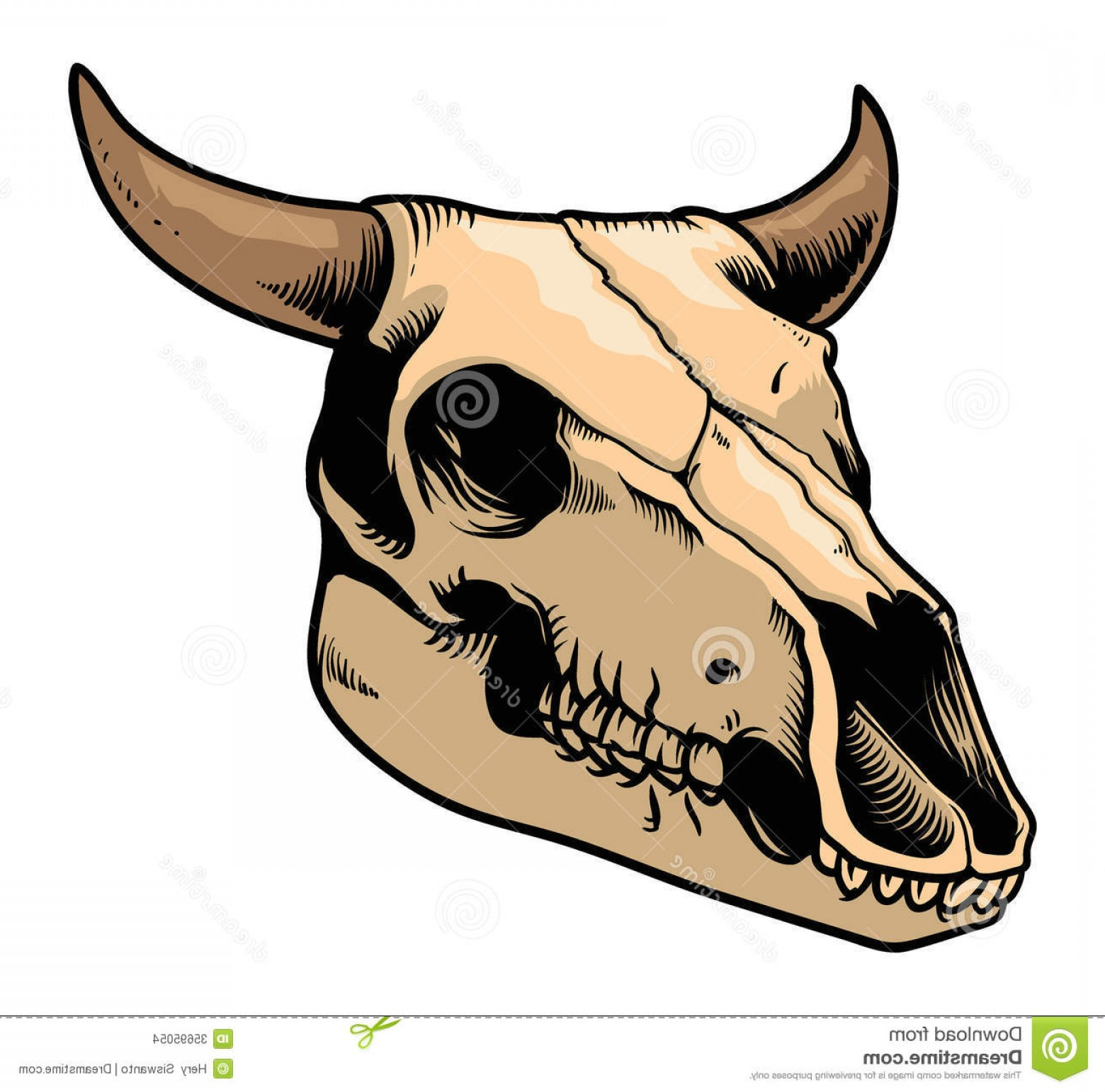 Cow Skull Vector Clip Art: Stock Images Cow Skull Vector Detailed Hand Draw Image