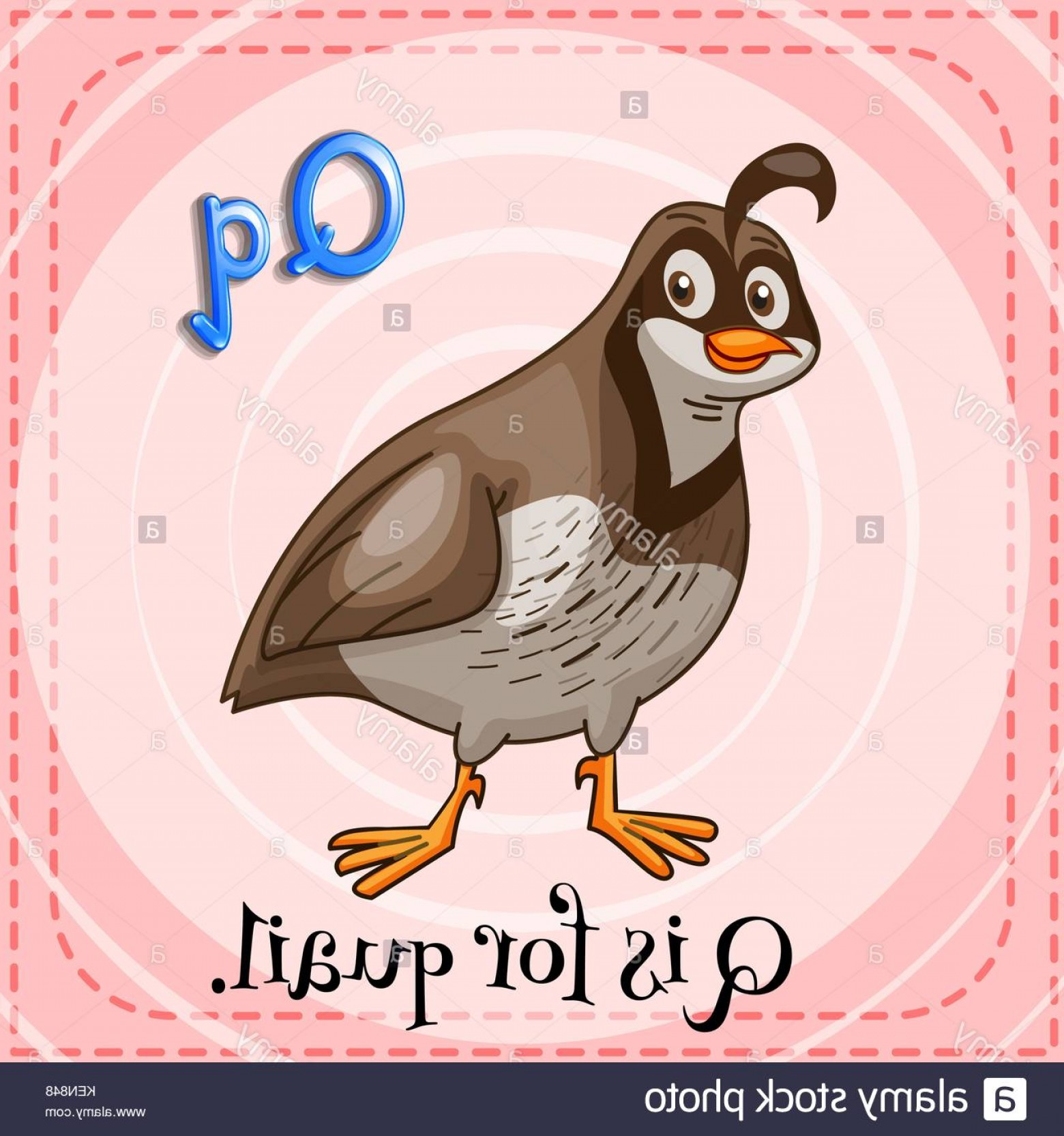 Quail Vector Art: Stock Photo A Letter Q For Quail