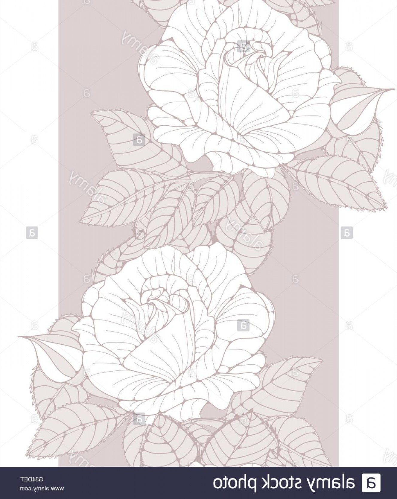 Vector Flower Band: Stock Photo A Romantic English Style Wallpaper Band Seamless Tile With White Roses