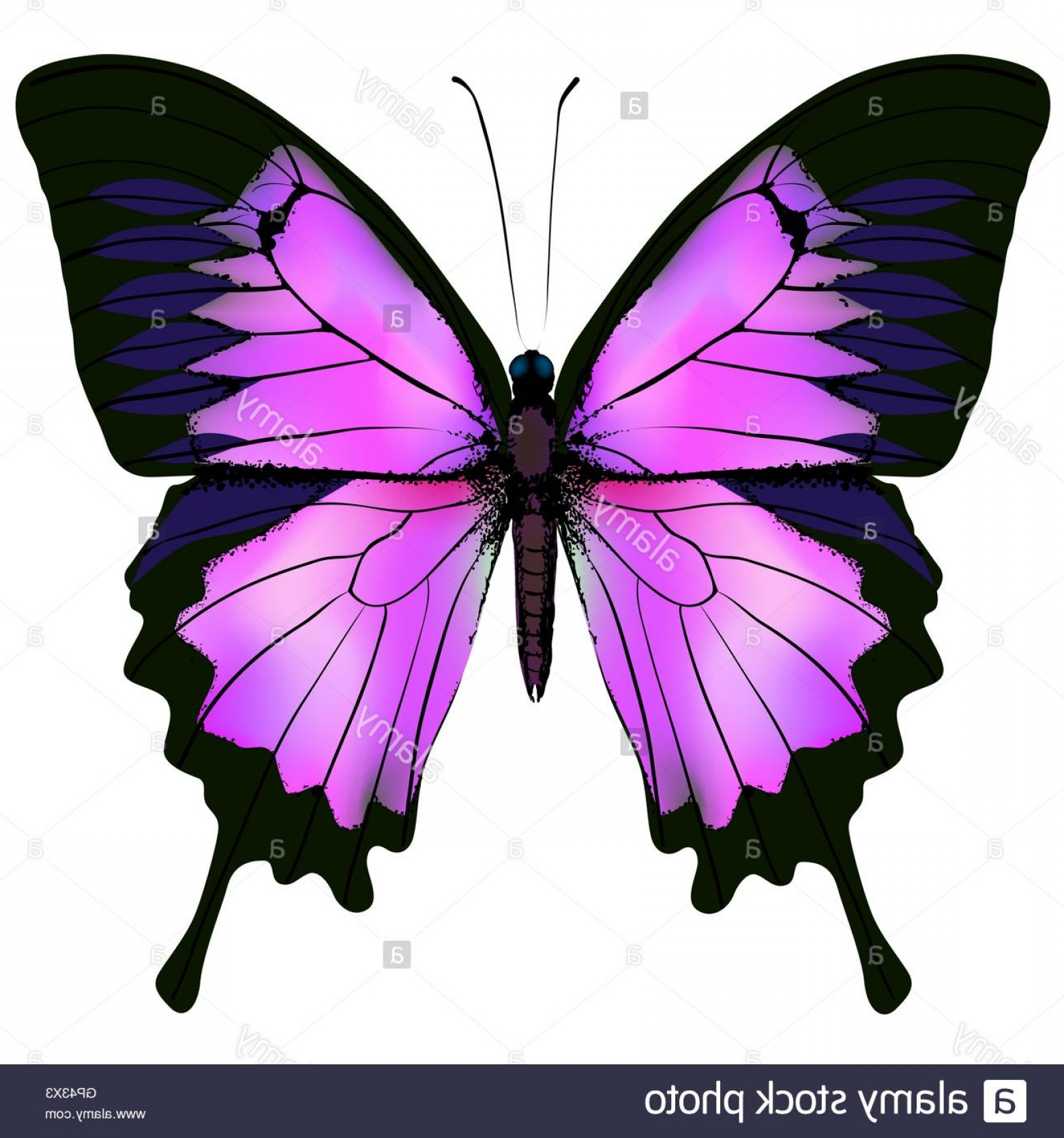 Butterly Vector: Stock Photo Butterfly Vector Illustration Of Beautiful Pink And Purple Color