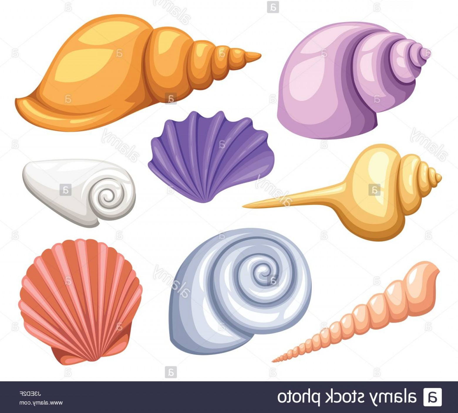 Shell Vector Icons: Stock Photo Colorful Tropical Shells Underwater Icon Set Frame Of Sea Shells Vector