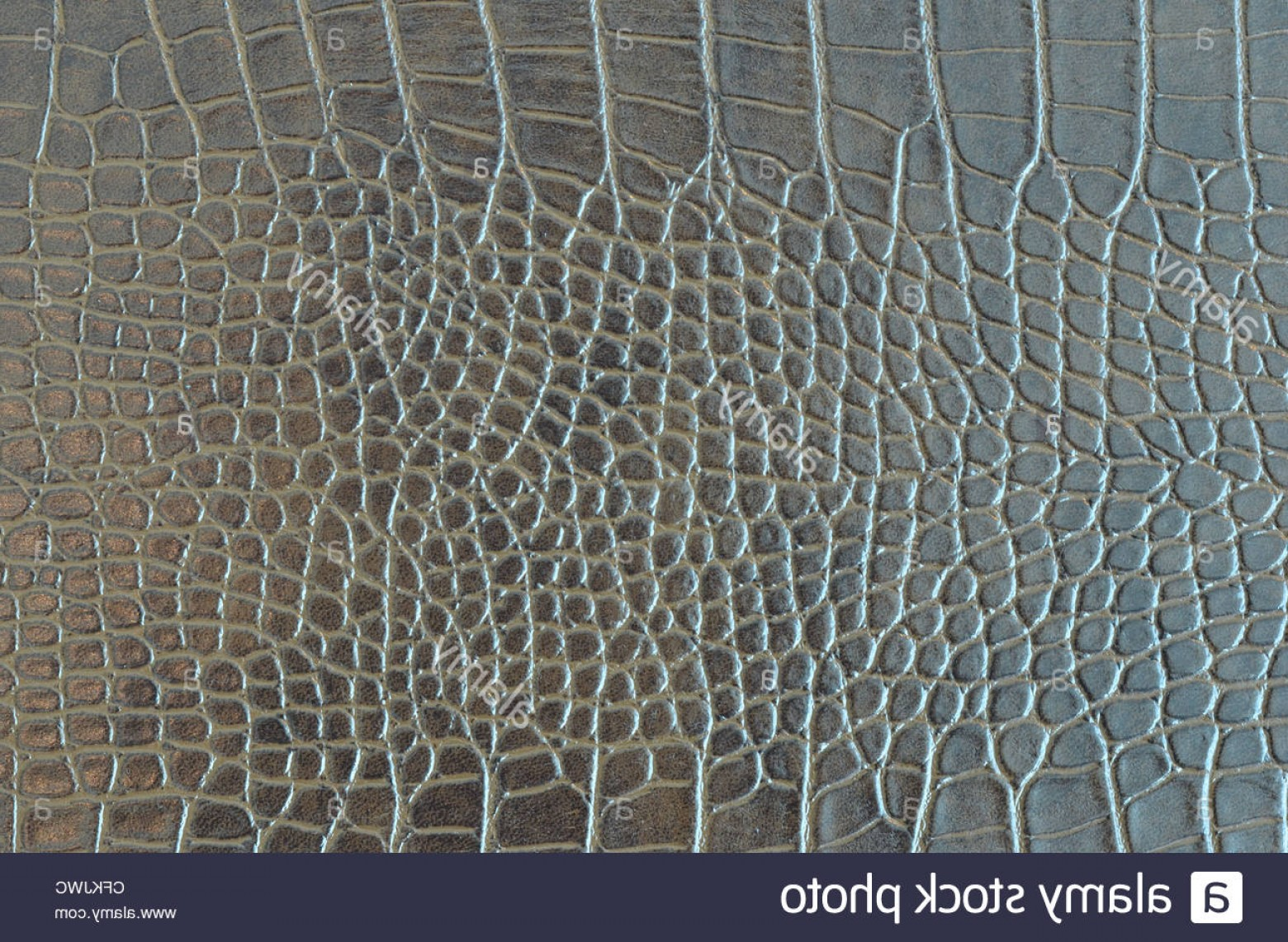 Alligator Skin Texture Vector: Stock Photo Crocodile Skin Pattern Alligator Skin Seamless Texture