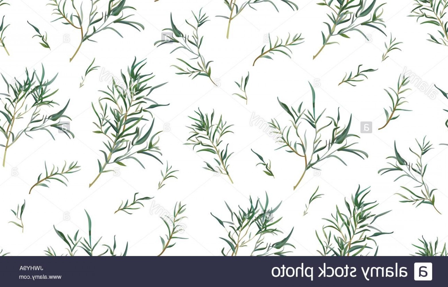 Vector Natural Willow: Stock Photo Eucalyptus Seamless Pattern Of Different Willow Tree Foliage Natural