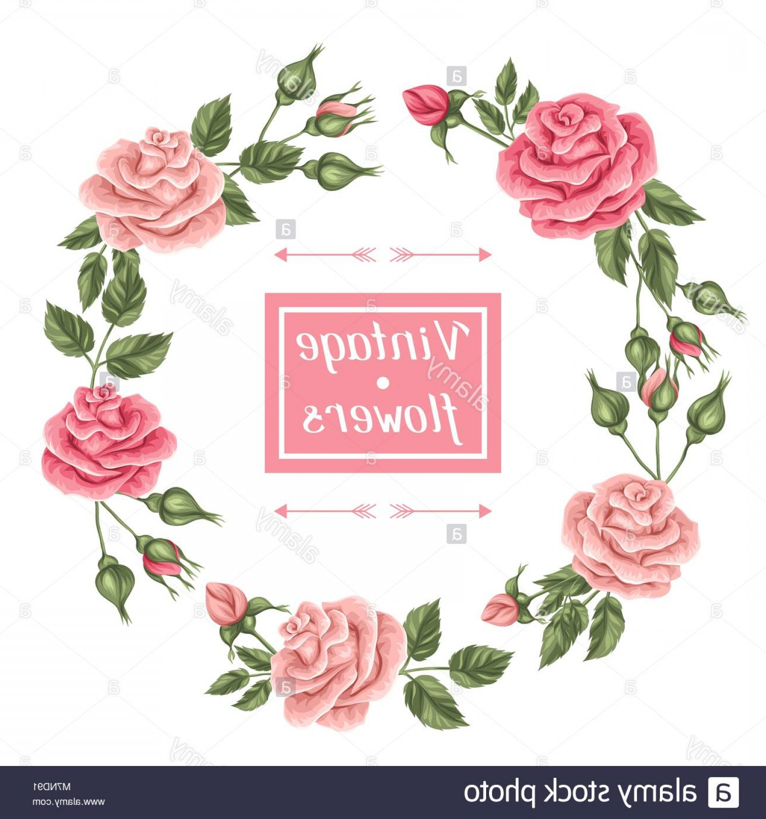 Romantic Vintage Flowers Vector: Stock Photo Frame With Vintage Roses Decorative Retro Flowers Image For Wedding