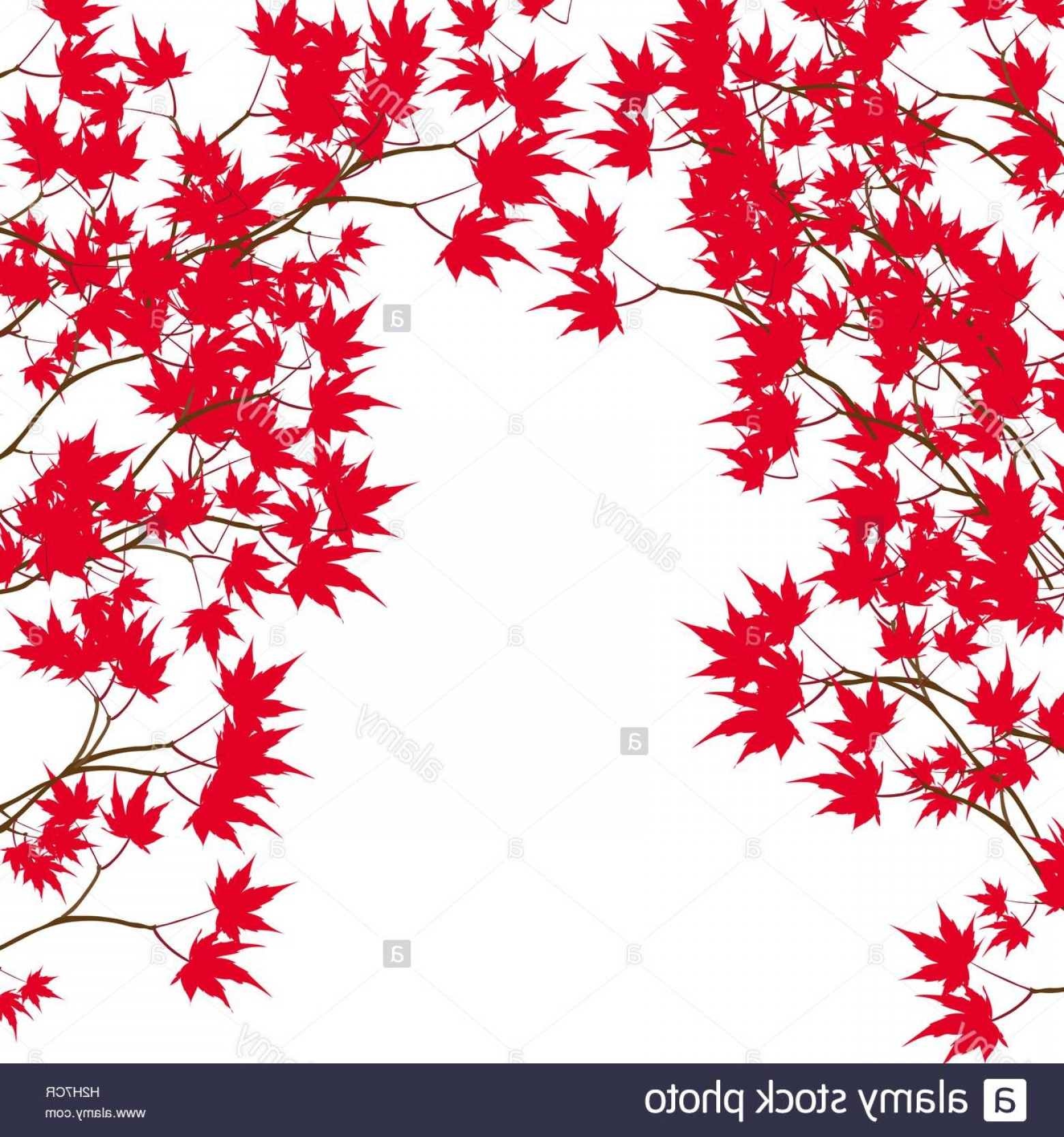 Red Maple Leaf Vector: Stock Photo Greeting Card Red Maple Leaves On The Branches On Either Side Japanese
