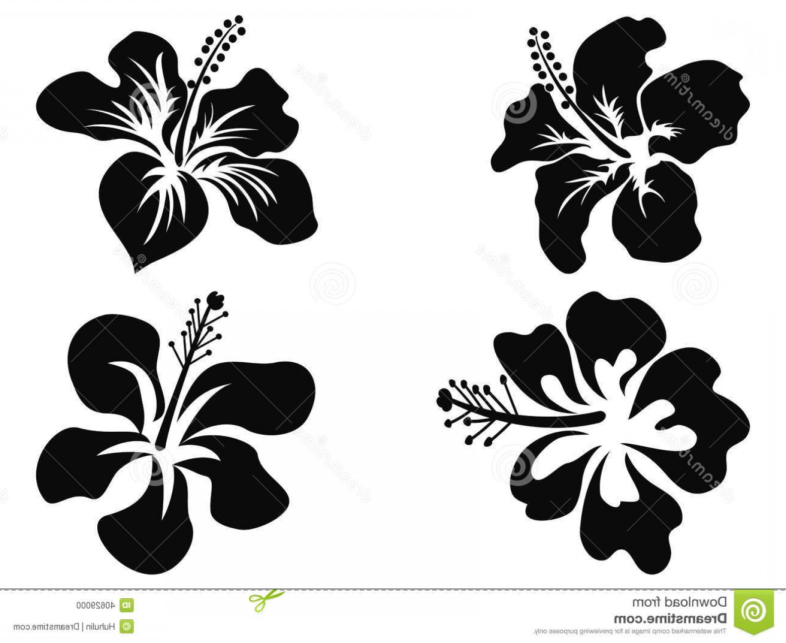 Hawaii State Flower Vector Art: Stock Photo Hibiscus Vector Silhouettes Isolated Black White Background Image