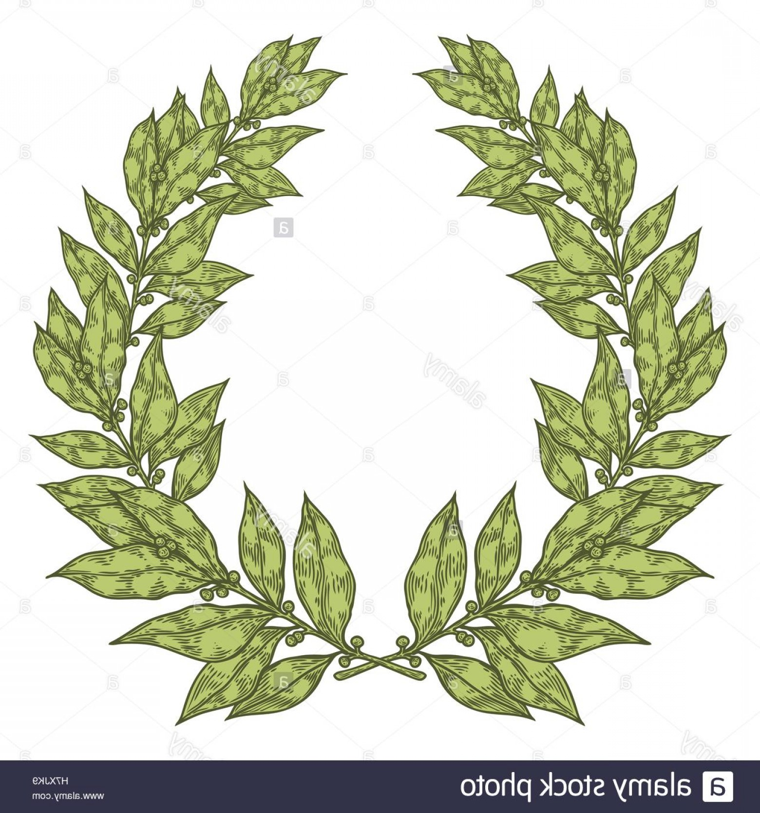 Green Bay Vector: Stock Photo Laurel Green Bay Leaf Hand Drawn Vector Illustration Vintage Decorative