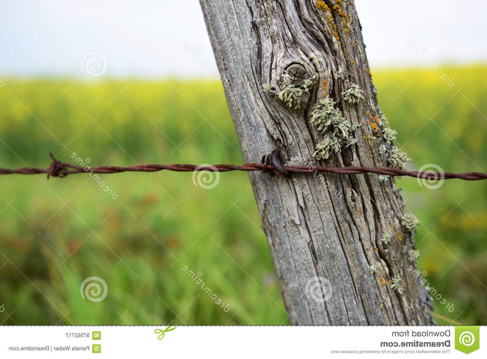 Fence Post Barbed Wire Vector Clip Art: Stock Photo Old Fence Post Barbed Wire Image Rusted Image