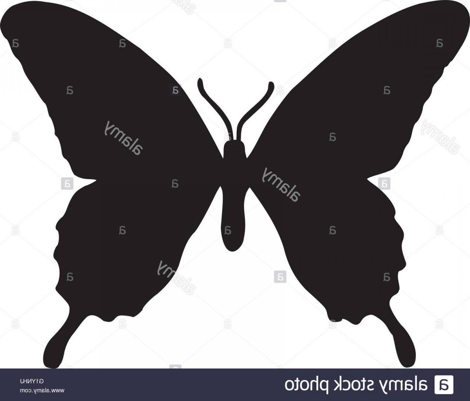 Real Butterfly Vector: Stock Photo Real Butterfly Silhouette