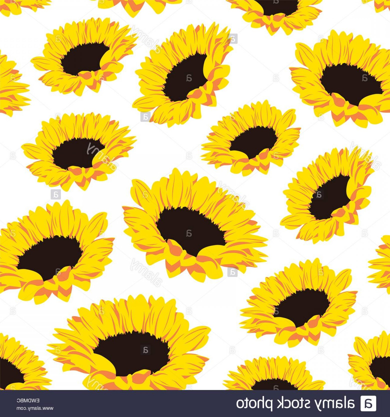 Sunflower Vector Pattern: Stock Photo Seamless Pattern With Sunflowers On White Background Vector Eps