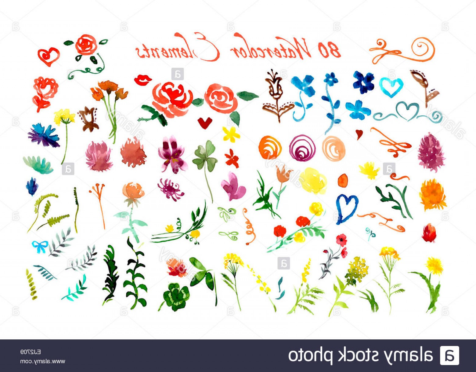 Flower Elements Vector: Stock Photo Set Of Watercolor Floral Elements Vector Illustration