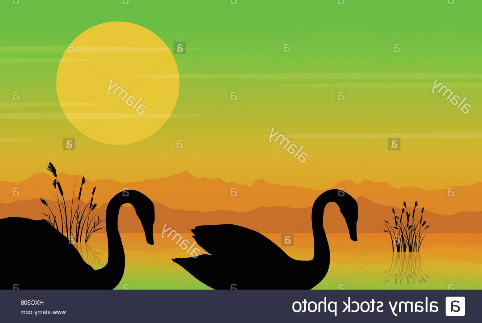 Swan Silhouette Vector: Stock Photo Silhouette Of Swan At Sunrise Beauty Scenery