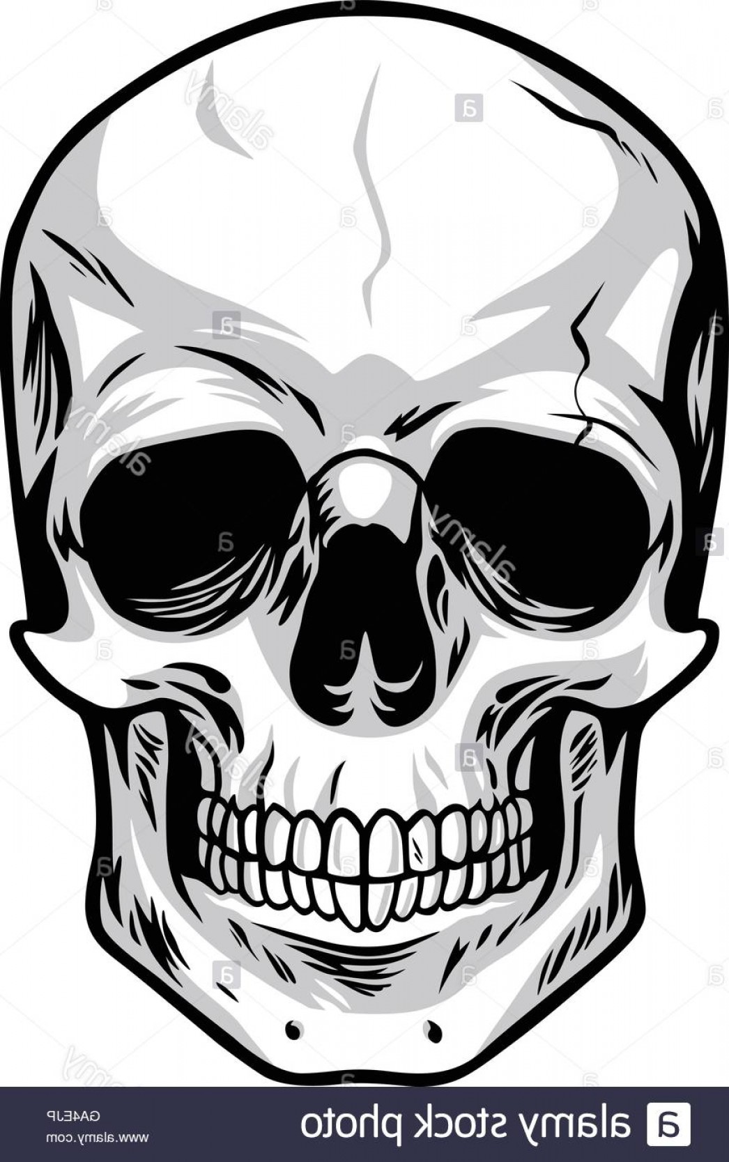 Cool Skull Vector: Stock Photo Skull Vector Art Illustrations