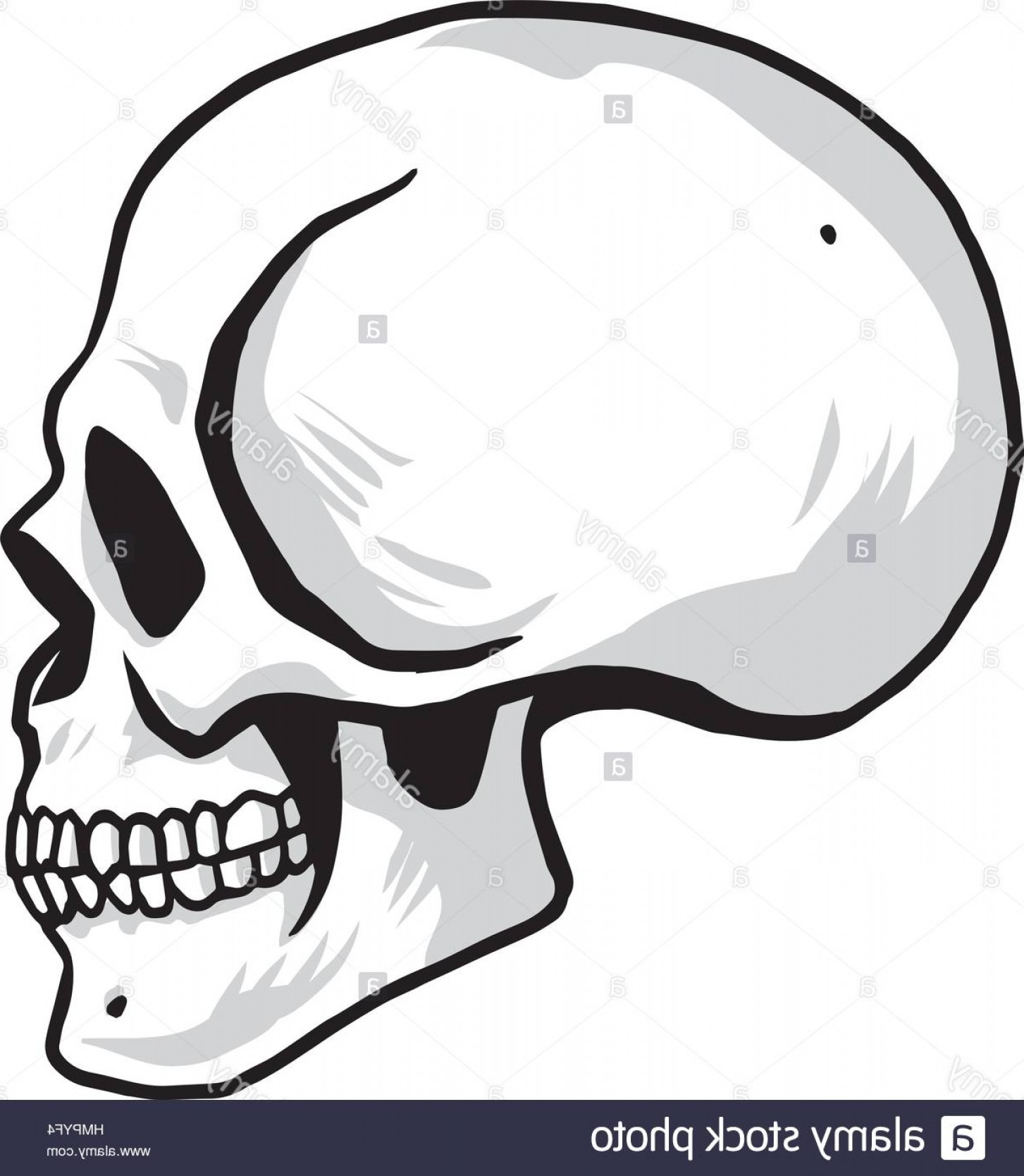 Cool Skull Vector: Stock Photo Skull Vector Illustration Sideview