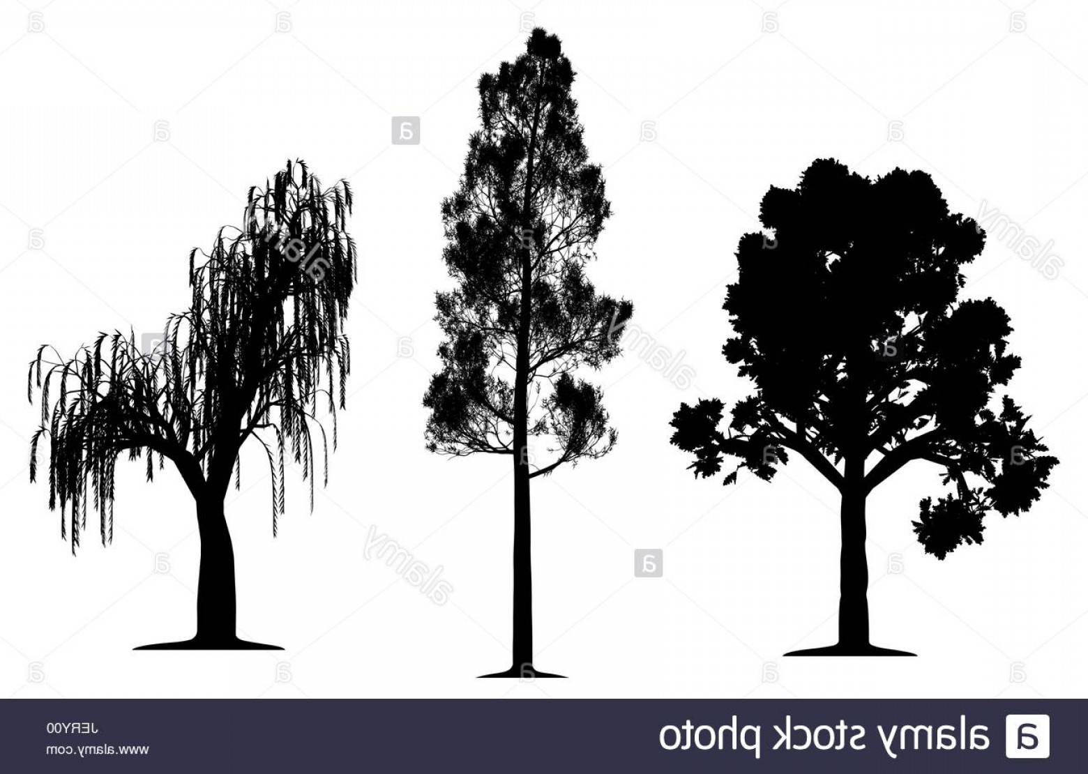 Oak Tree Silhouette Vector Graphics: Stock Photo Tree Trees Pine Oak Silhouette Weeping Willow Vector Forest Leaf