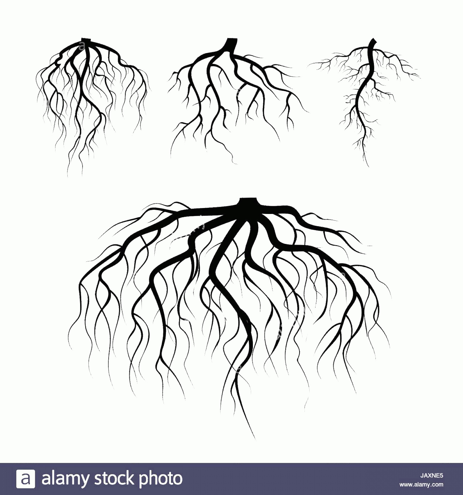 Vector Tree With Roots Drawing: Stock Photo Tree Underground Roots Vector Set Illustration Isolated