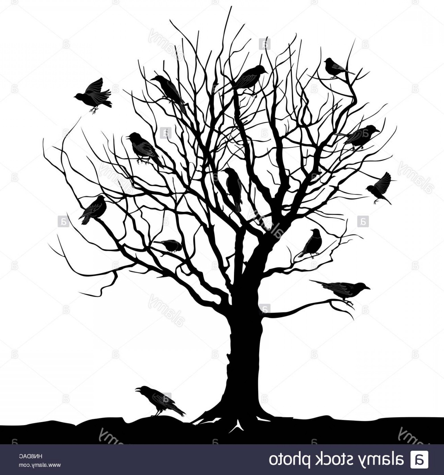 Winter Tree Silhouette Vector: Stock Photo Winter Tree With Birds On Twig Vector Silhouette Illustration