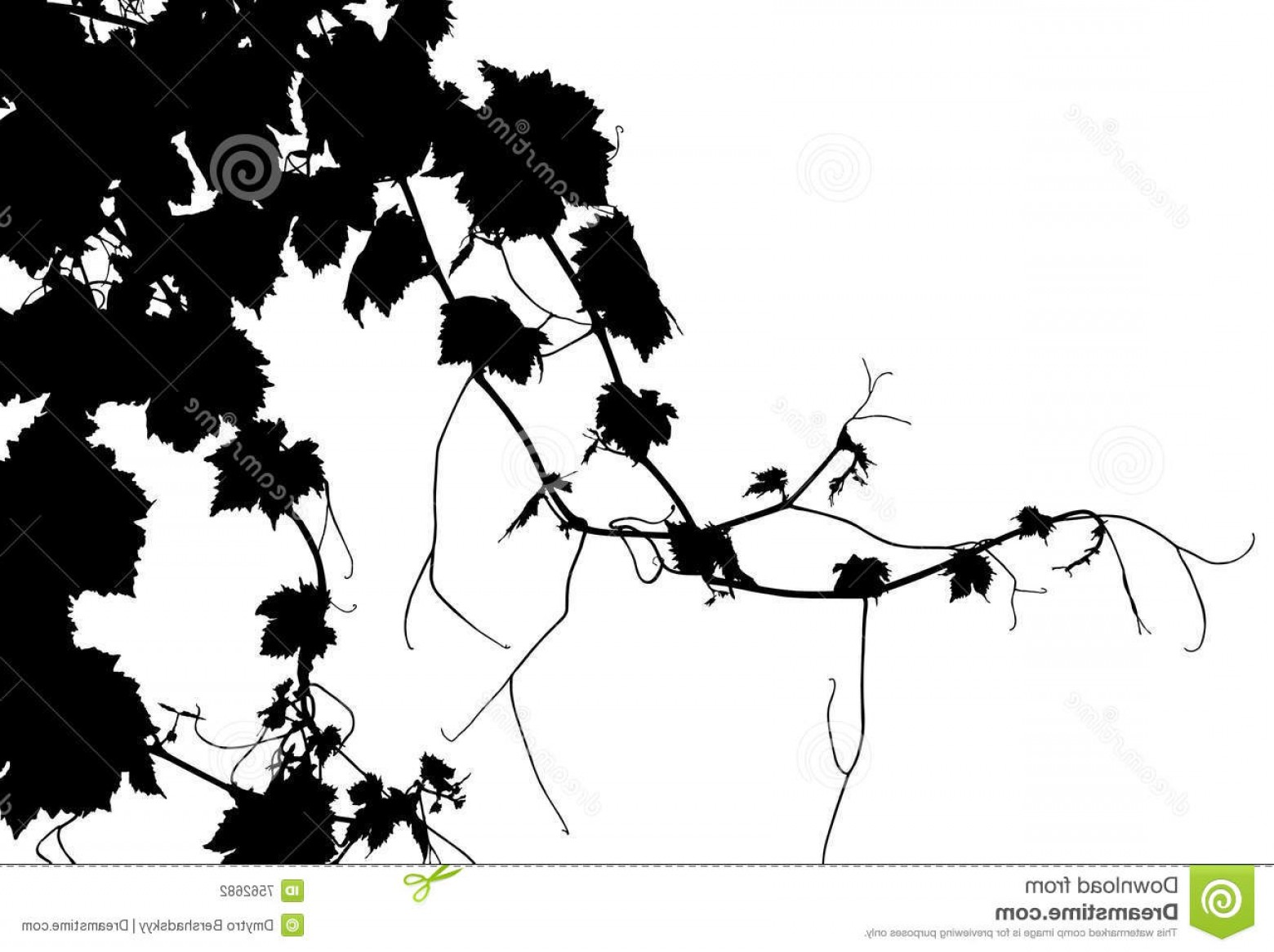 Vector Vine Tree: Stock Photography Vector Grape Vine Image