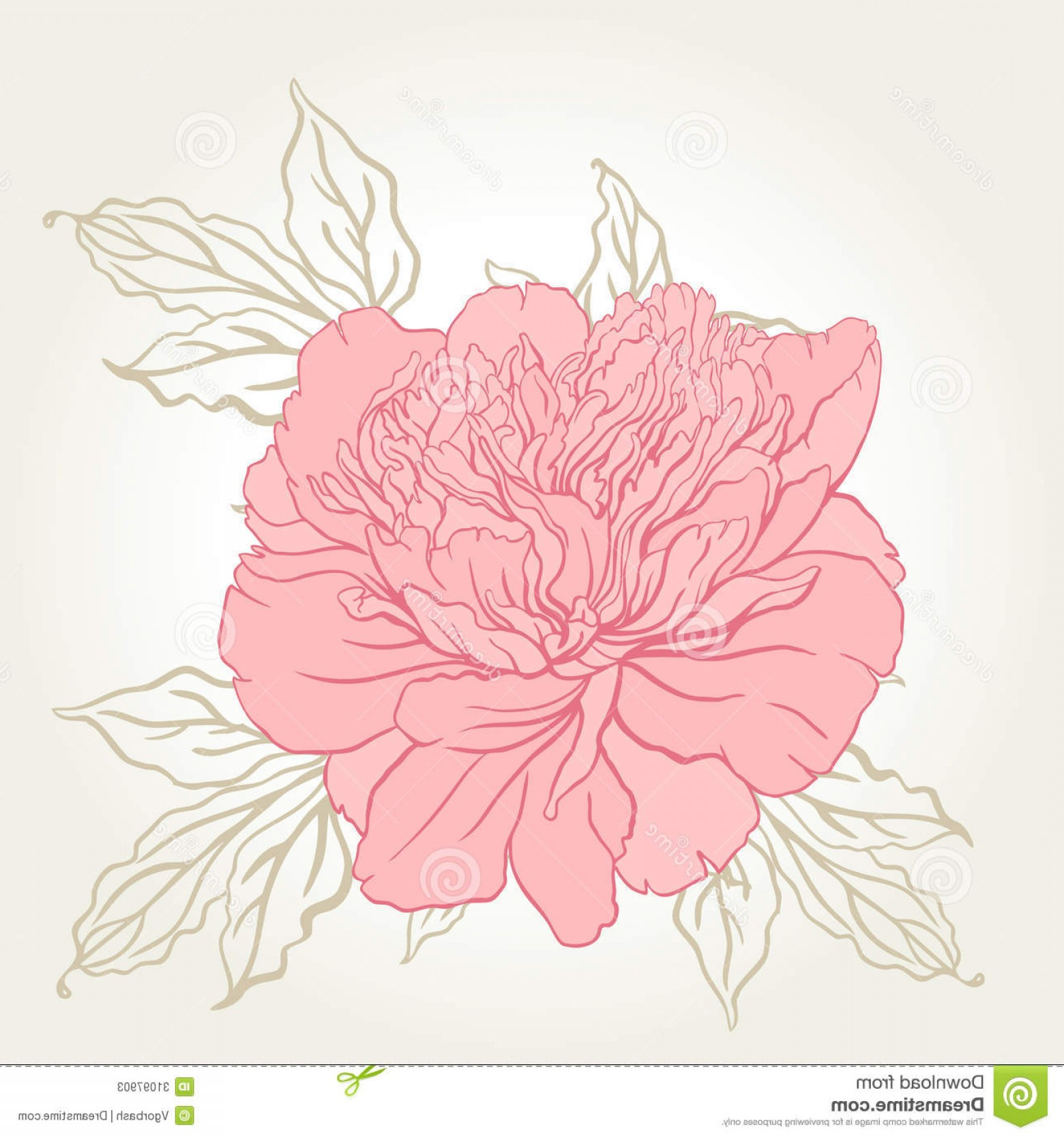 Pink Peony Vector: Stock Photos Beautiful Peony Bouquet Design Beige Background Vector Illustration Image