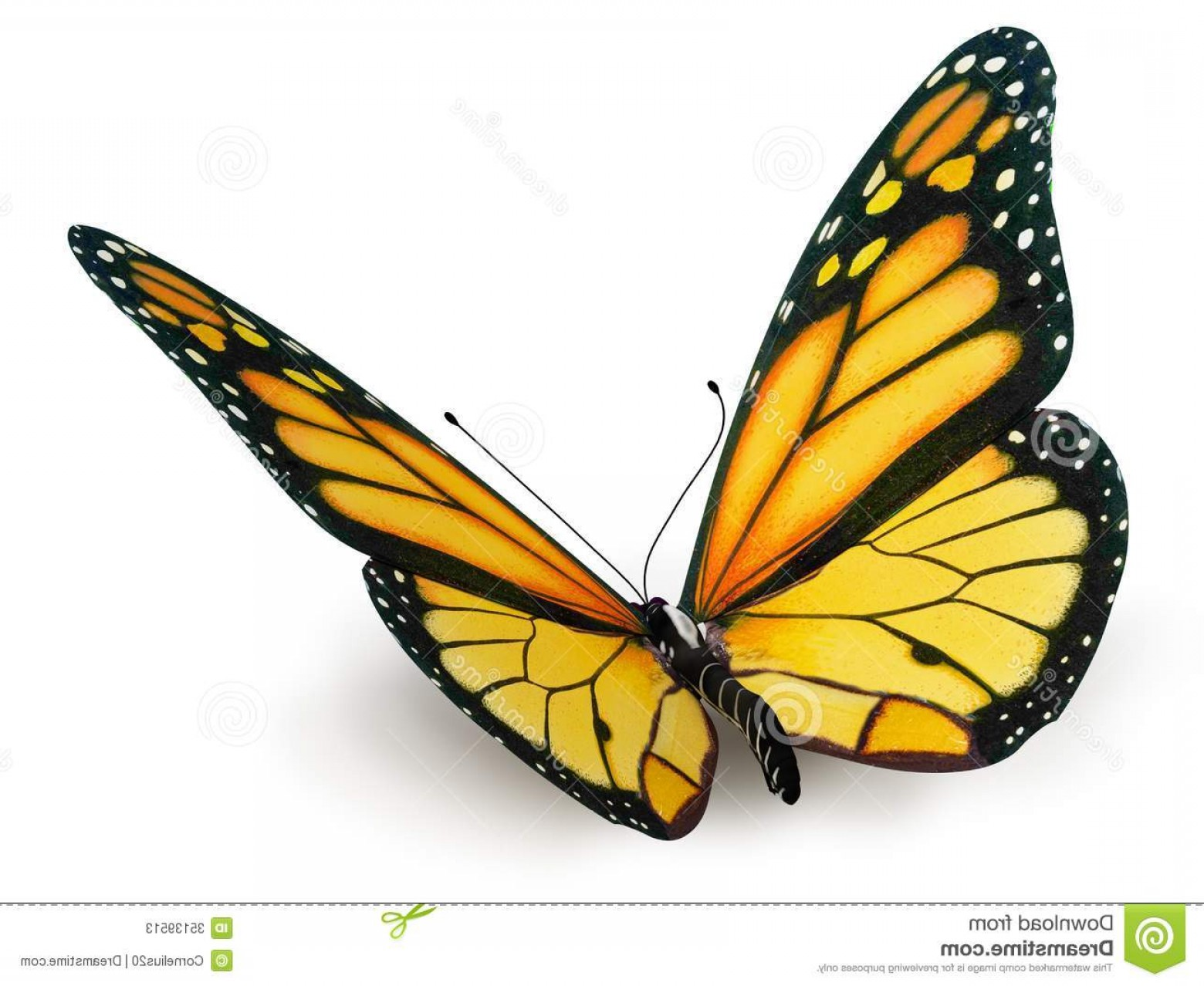 Real Butterfly Vector: Stock Photos Butterfly Yellow White Background Isolated Image