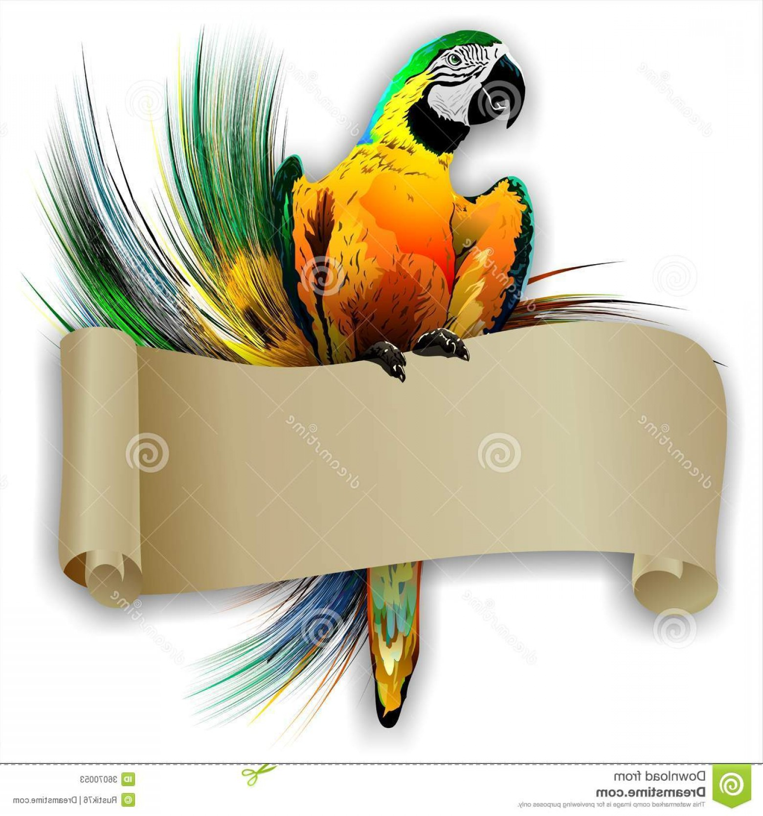 Abstract Vector Art Parrot: Stock Photos Parrot Empty Scroll Abstract Background Vector Image Bright Clean Color Image