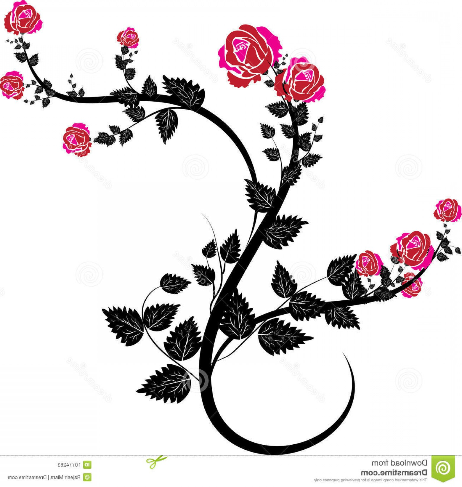 Vector Vine Tree: Stock Photos Rose Vines Image