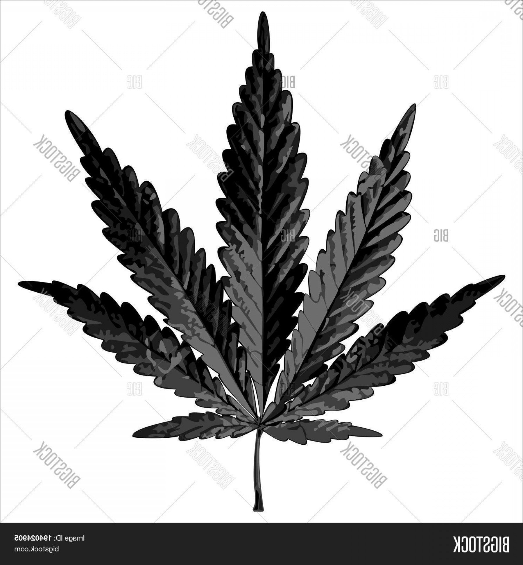 Black And White Vector Image Of Weed Plants: Stock Vector Black Cannabis Leaf On A White Background Vector