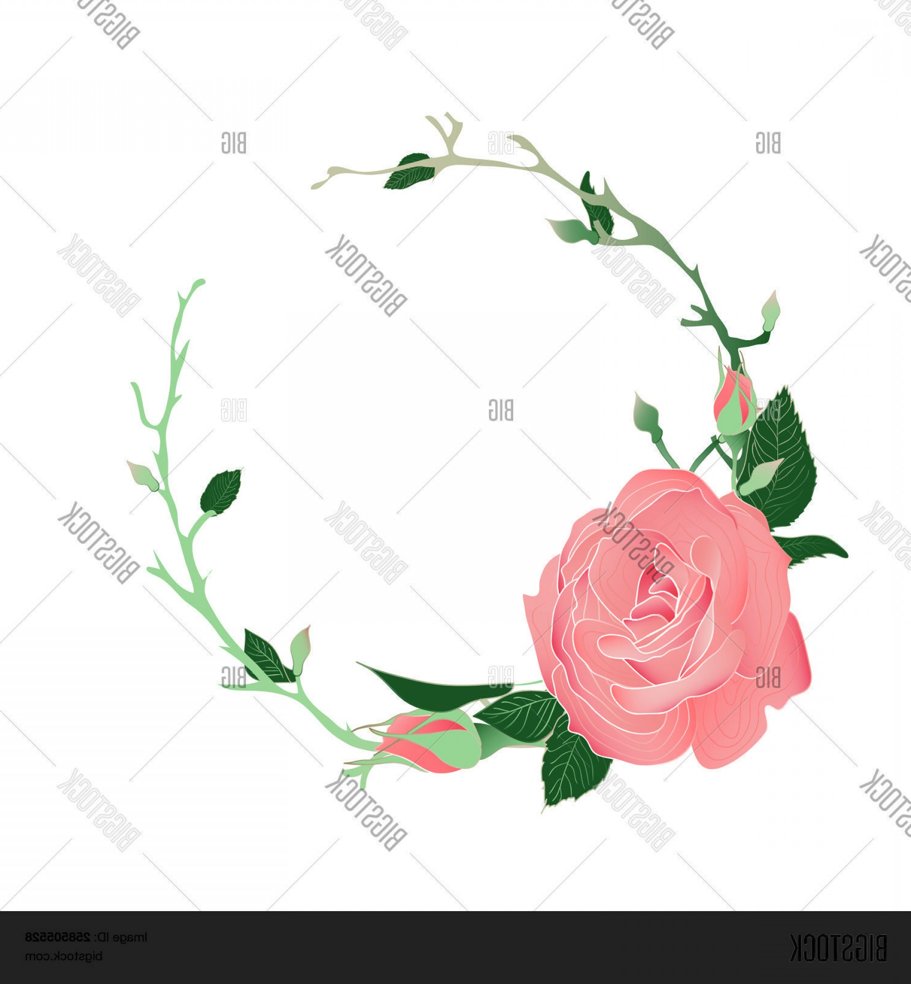 Vector Image Of A Budding Flower: Stock Vector Blooming And Budding Pink Rose Flowers Wreath