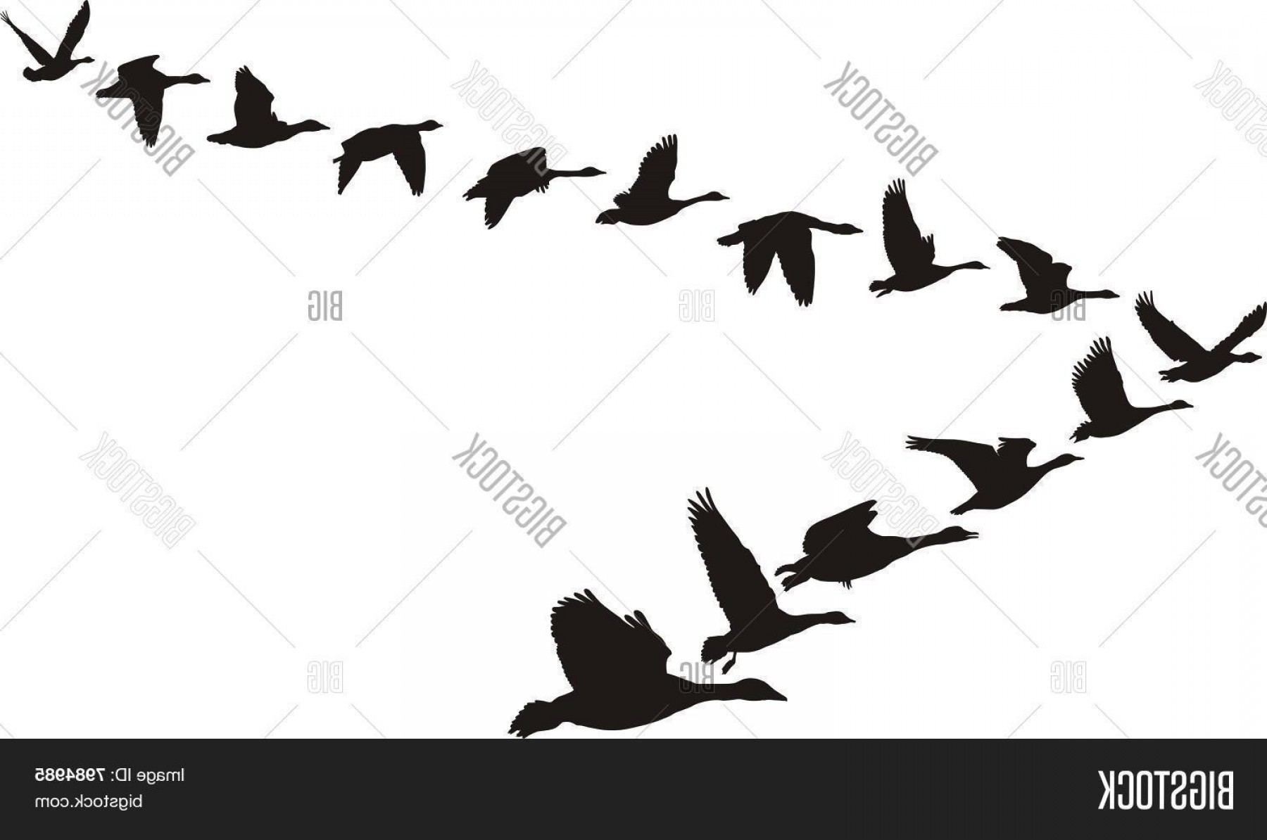 Geese Vector: Stock Vector Geese Flying In The Shape Of The Unit