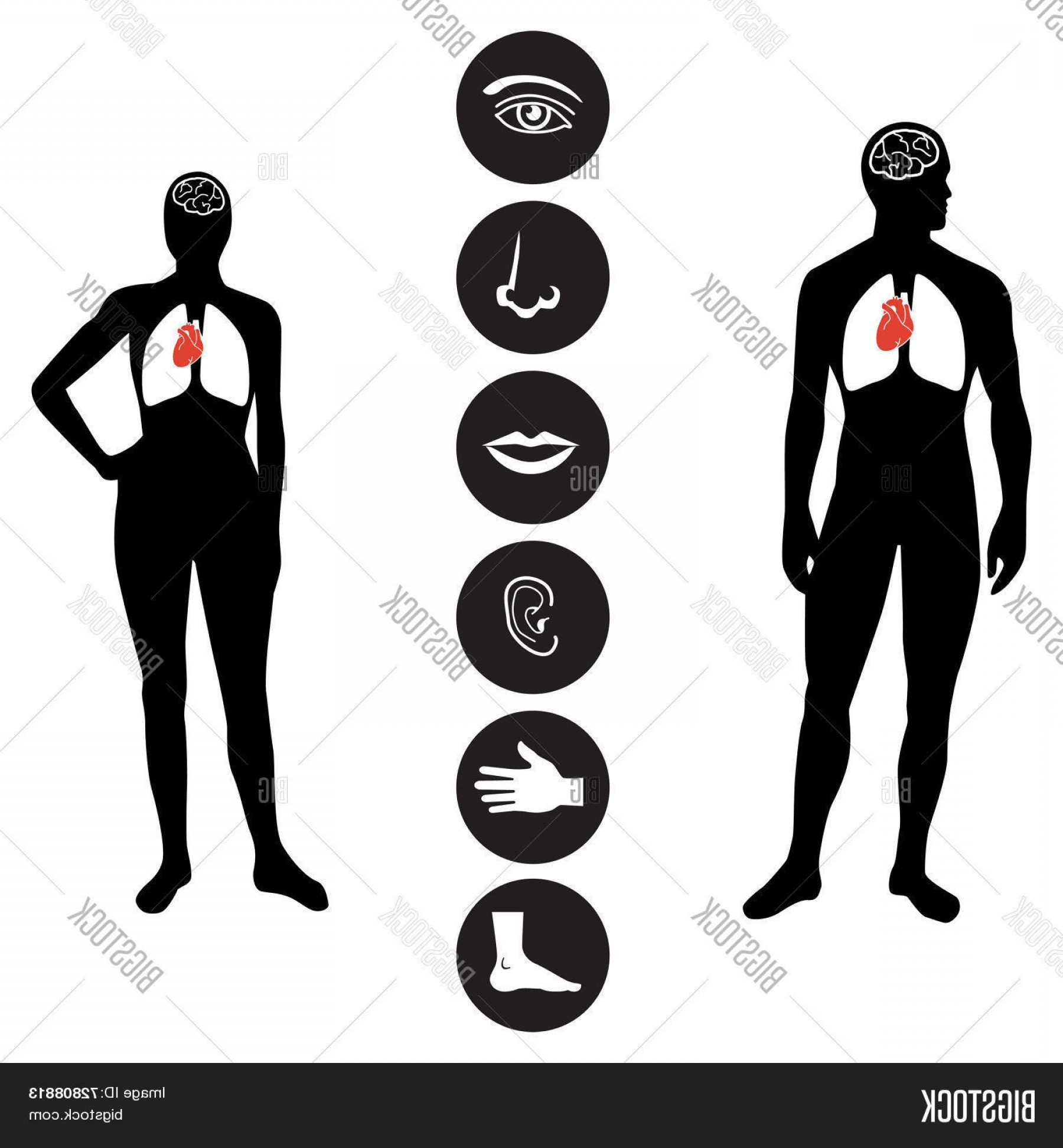 Female Parts Vector: Stock Vector Medical Human Body Part Icon Illustration