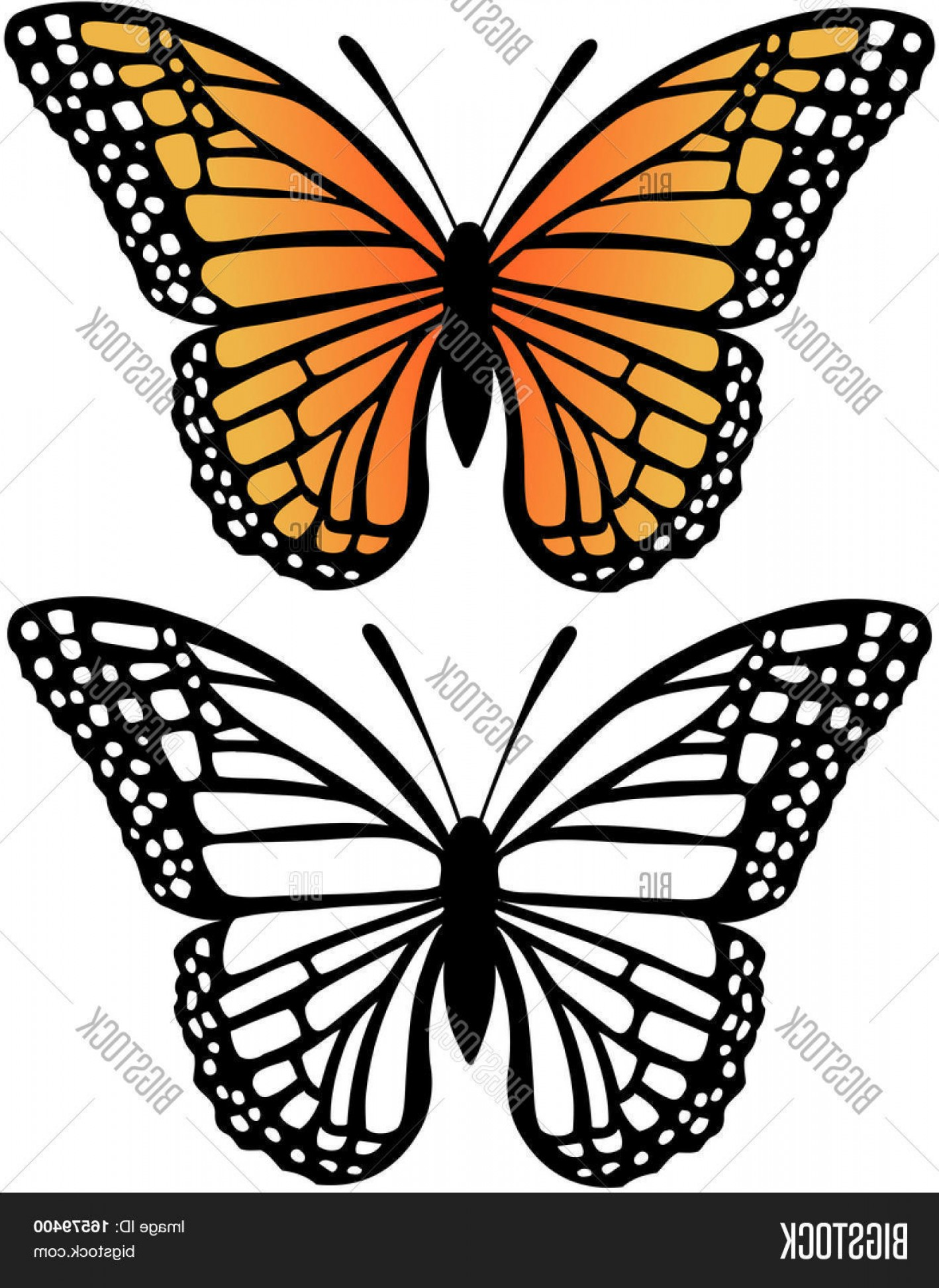 Butterly Vector: Stock Vector Monarch Butterfly Vector Illustration