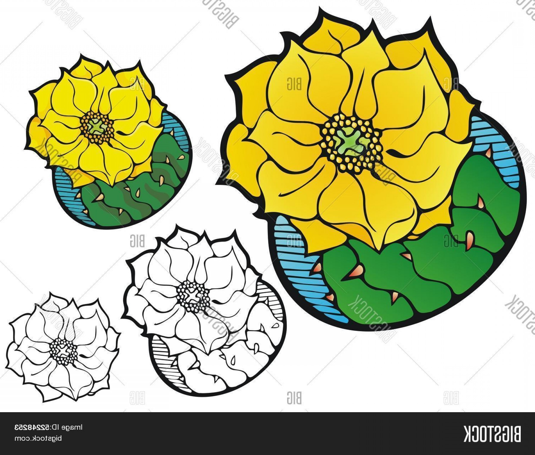 Cactus And Flower Vector: Stock Vector Prickly Pear Cactus Flower