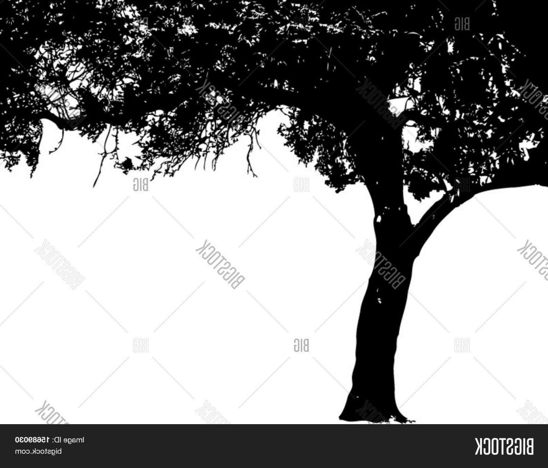 Oak Tree Silhouette Vector Graphics: Stock Vector Vector Of An Oak Tree Silhouette