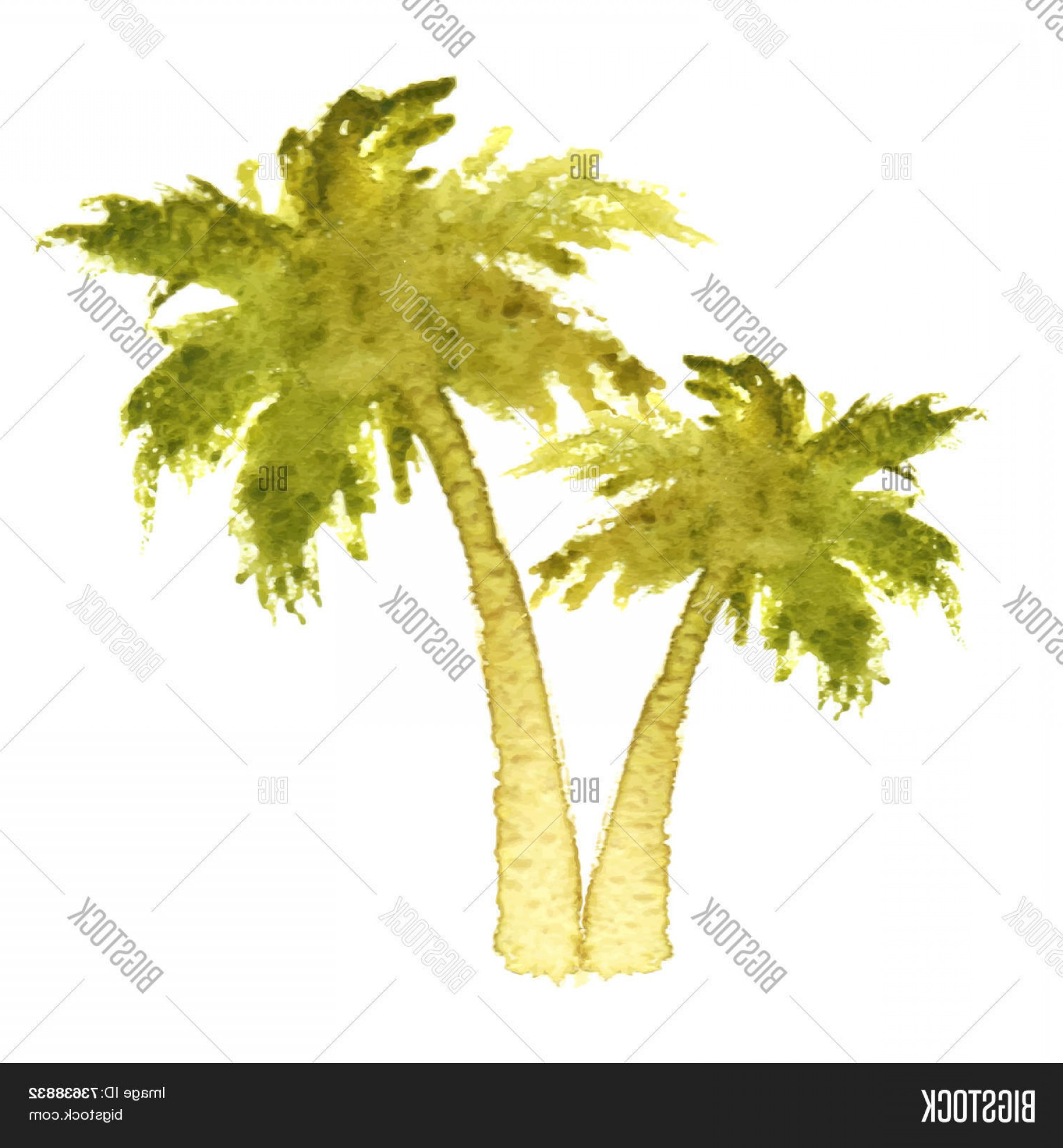 Watercolor Palm Tree Vector: Stock Vector Watercolor Palm Trees Over White Background