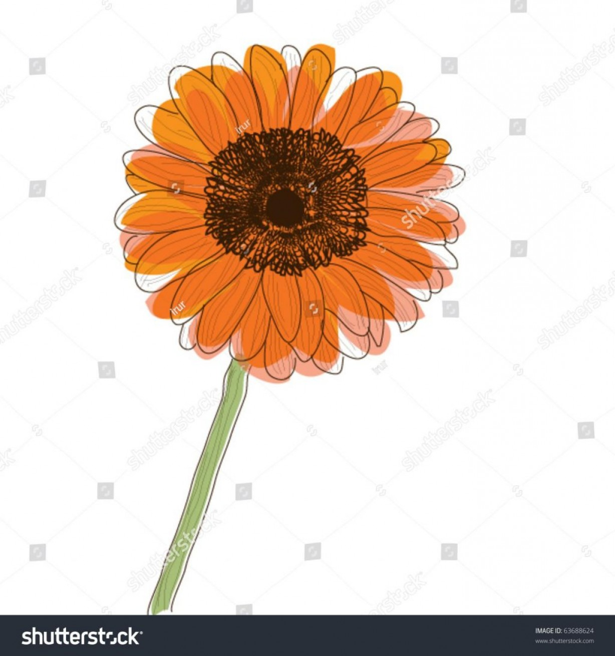 Orange Gerber Daisy Vector: Stylish Best Free Stock Vector Orange Gerbera Daisy Flower Retro Style Drawing