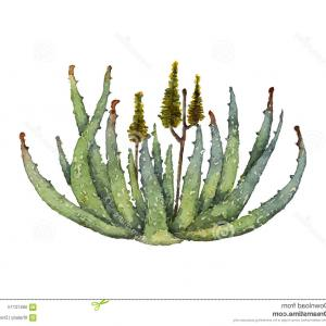 Aloe Vector Graphics: Aloe Vera Plant And Its Parts Vector Illustration Gm
