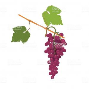 Grapes Vector Art: Stock Illustration Bunch Of Grapes Vector Drawing