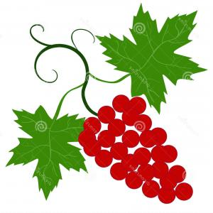 Vector Vine Tree: Floral Frame Grapevine Grape Clusters On