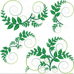 Green Vine Vector: Stock Illustration Green Vine Vector Made Leaf Illustration Image