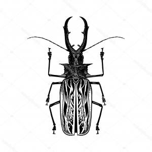 Black And White Vector Bug: Stock Illustration Insect Beetle Isolated On White