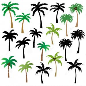 Palm Tree Vector Clip Art: Stock Illustration Palm Trees Vector Clipart Graphics Image