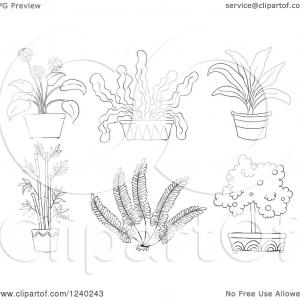 Potted Plant Vector Black: Stock Illustration Pot Plants Set Hand Drawn